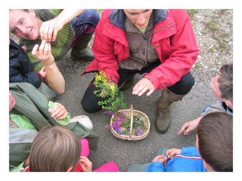 enfants decouverte plantes nature stage