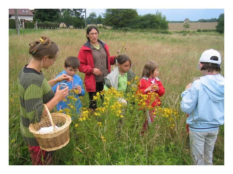 decouverte enfants nature stages plantes