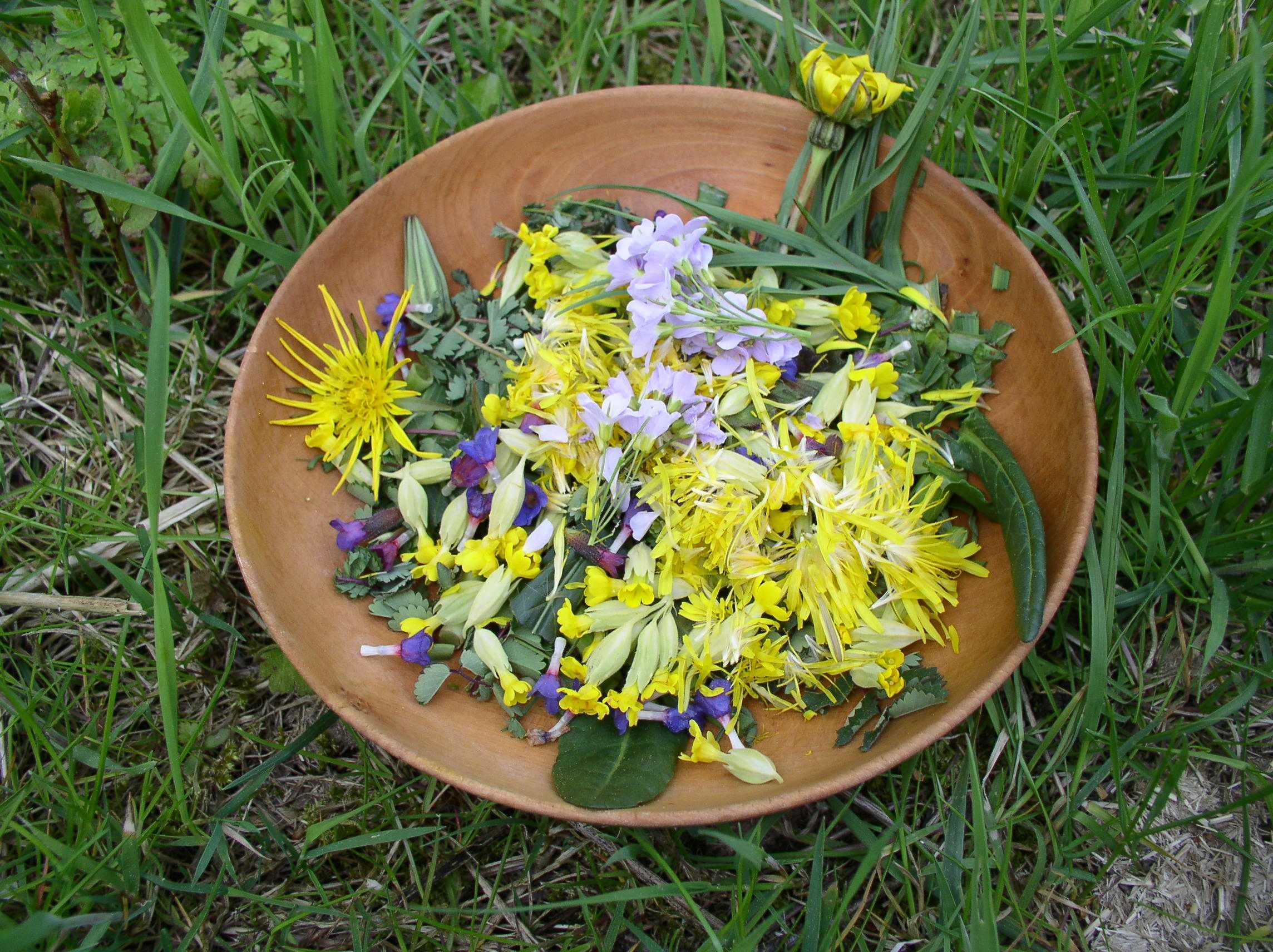 salade sauvage, douceur d`avril
